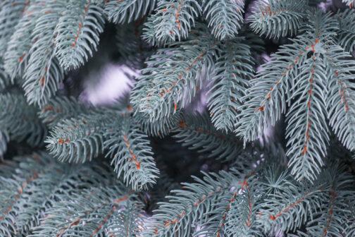 Ветви искусственной ели Премиум Голубая купить
